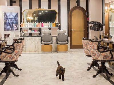 Renoir Parrucchieri Class Hair Salon - 1