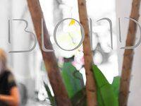 Blondie - 21